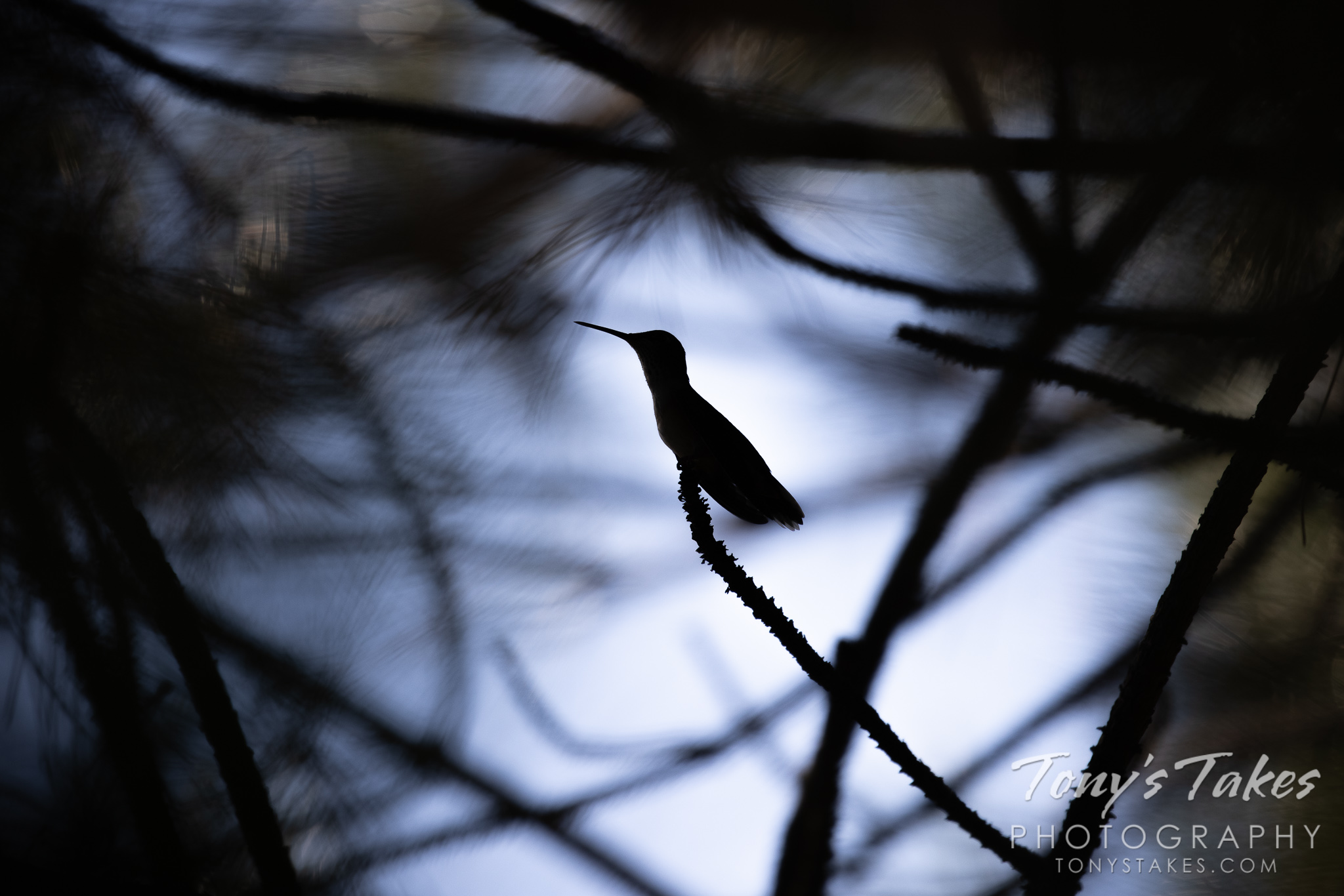 Silhouetted hummingbird signifying the end of the season