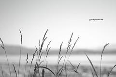 Grass 2413