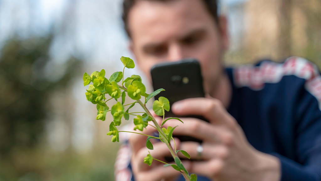 a man taking a photo of a plant with their smartphone