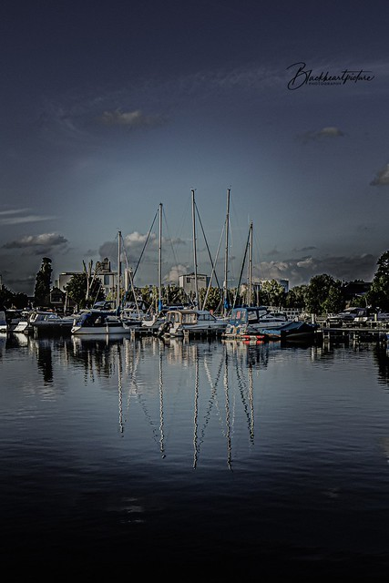 Dark Harbour