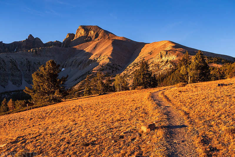 Wheeler Peak Summit Trail