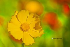 Flower 2355