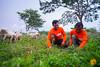 Penerima Bantuan Peternakan
