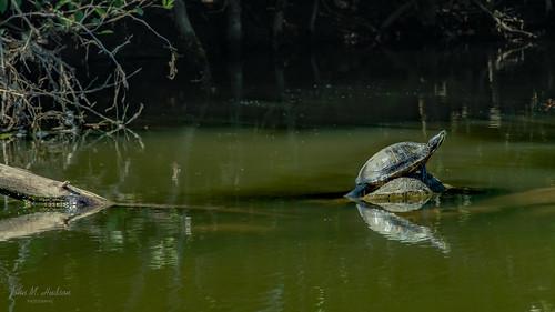 2020.09.07.2958.D850 Pond Slider