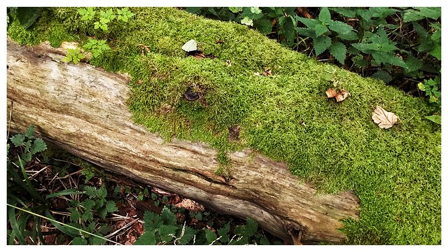 Dead trunk covered with moss