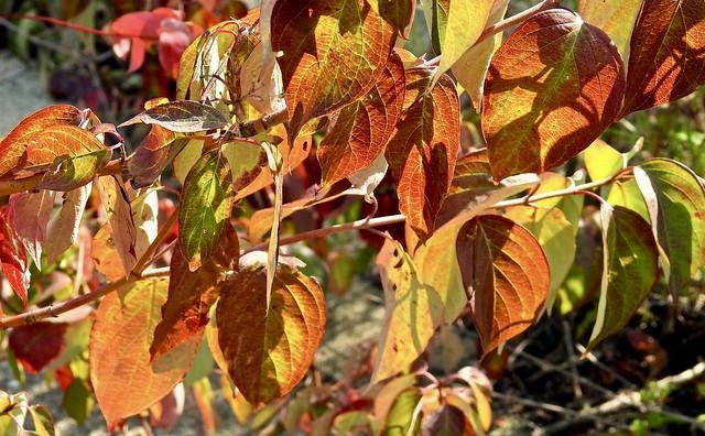 Fall is nearing