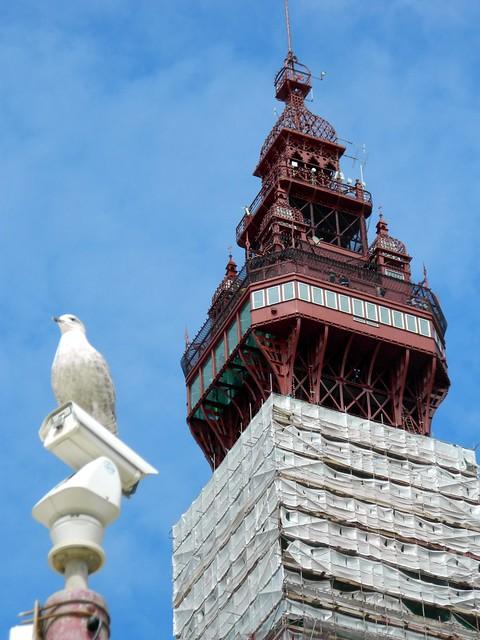 Watching..., Blackpool Tower, Lancs.