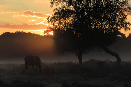 IMG_1700 - Sunrise - New Forest - 10.09.20 | by Colin D Lee