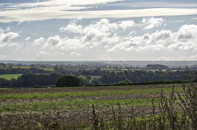 Layered Landscape , near Winchester, hampshire