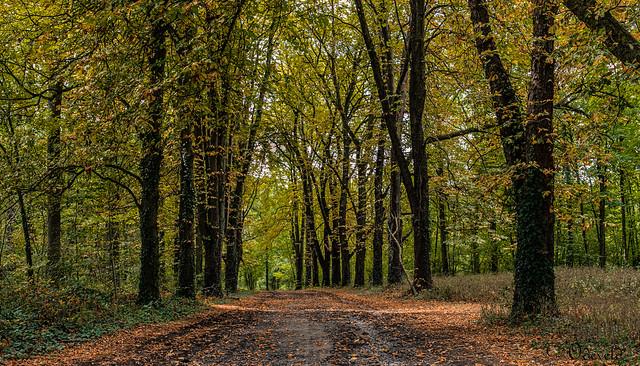 Bois de Pierreux. The Famenne, Belgium.  IMG_0086