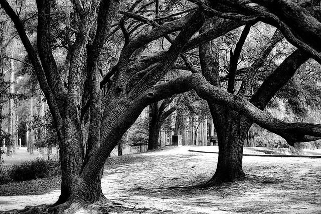"""Graceful Trees"""