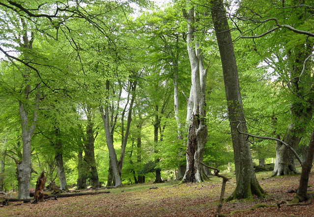 New Forest NP, Hampshire, UK