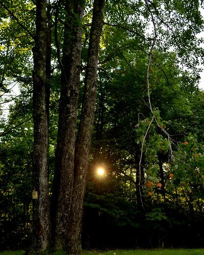 highlands katuah summer sunset klonteska mountain forest maple setting light sun sunbeam flora tree trees appalachia