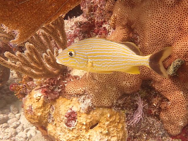 Florida Dive Report 16 Sept. AM 2020