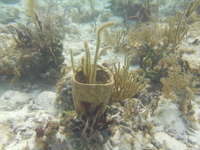 Florida Dive Report 18 Sept. AM 2020