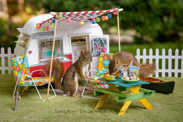 Getting squirrely so time for a little camping trip (Home Sweet Home flickr gallery..thanks!)