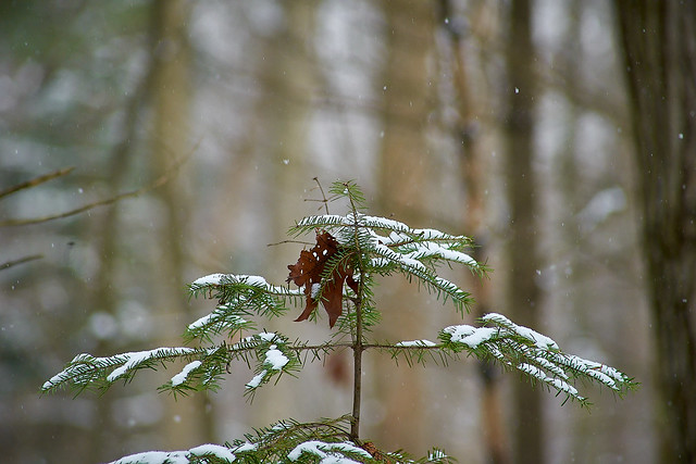 Snow and Leaf