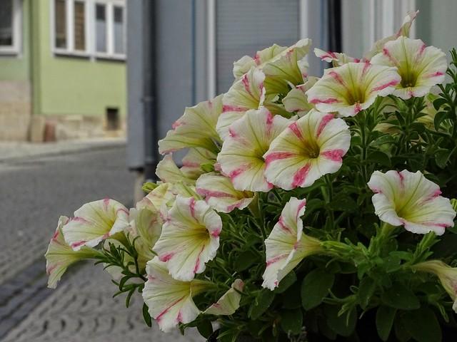 Street flower 💕