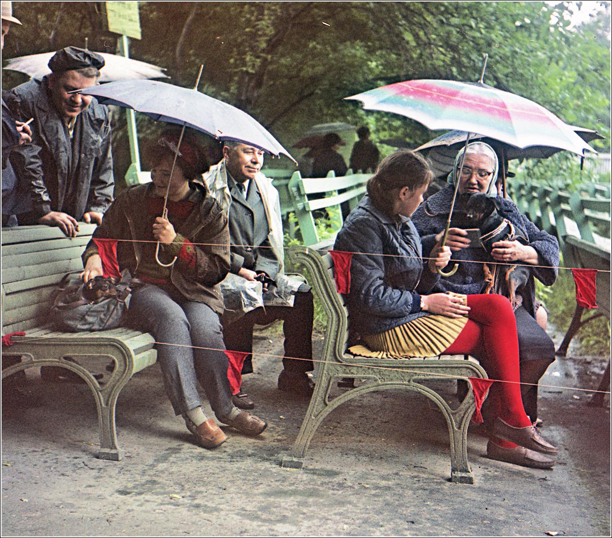 153. 1970. Выставка собак