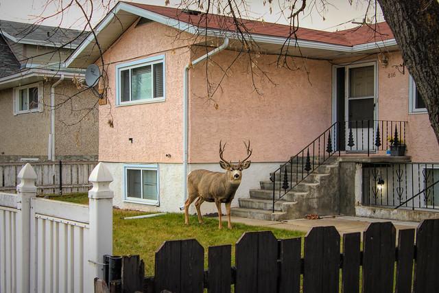 A Deer friend popped by