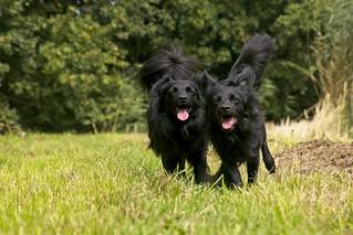 Onofficiële status van de update van het hondenforum - Pagina 12 50330292762_5dd22e555b_n