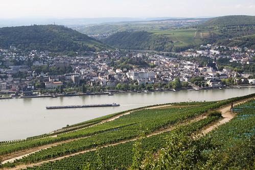 Rheingau 023