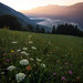 Sunrise over a high alpine meadow with wild flowers. High up in the Drau valley with fog on the valley floor and sunlight peeking through the mountains, Carinthia, Austria
