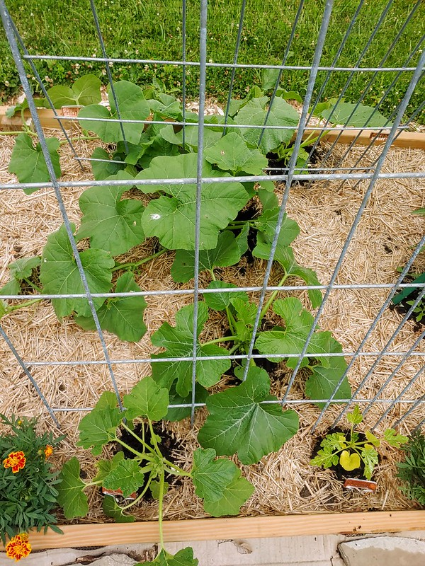 Close-up of the Squash Bed