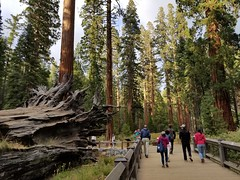 Yosemite_Sept.2019_JonWang
