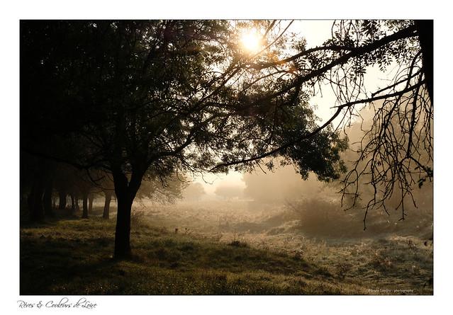 Jouer avec la lumière du matin