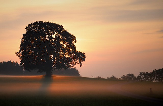 Beautiful Light at my favorite tree