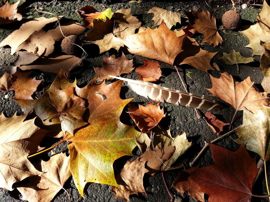 Отложила Осень в сторону пёрышко