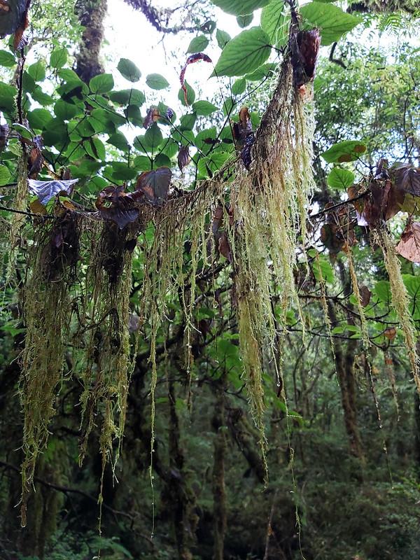 Lake Songluo or Lake Syanoh in Atayal and plant usnea