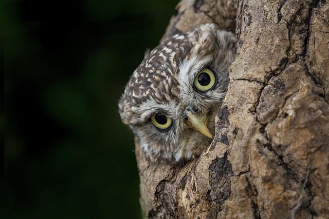 'Peek a boo!' -