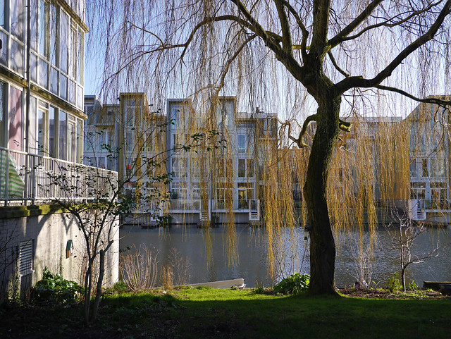 Picture of a Weeping willow with early-green branches and leaves, in early urban Spring along the canal - free photo Amsterdam, Fons Heijnsbroek