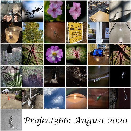 Project 366 August