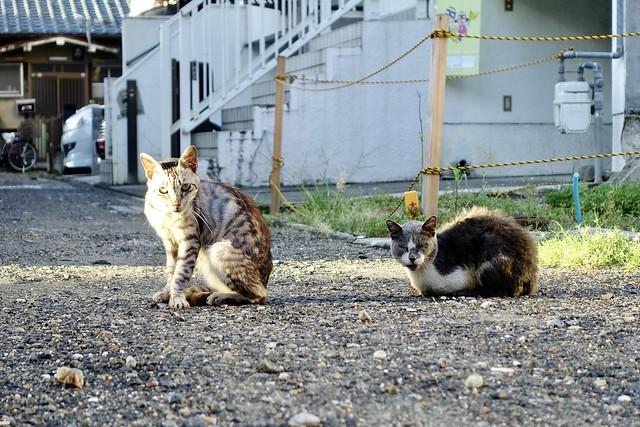 Today's Cat@2020ー09ー12