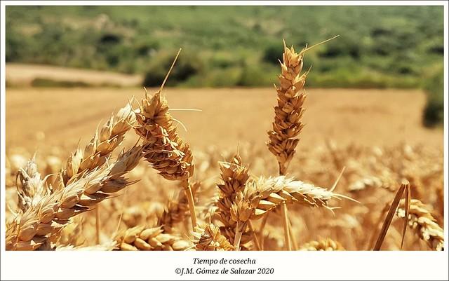 Tiempo de cosecha / Harvest time