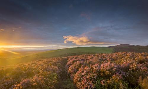 moelarthur clwyd hills wales flintshire landscape sunrise heather clouds sun uk unitedkingdom greatbritain nikond7200 sigma1020