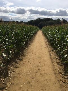 Through maize Whyteleafe Circular