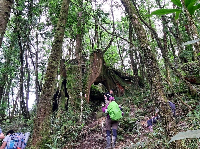 Lake Songluo: big trees