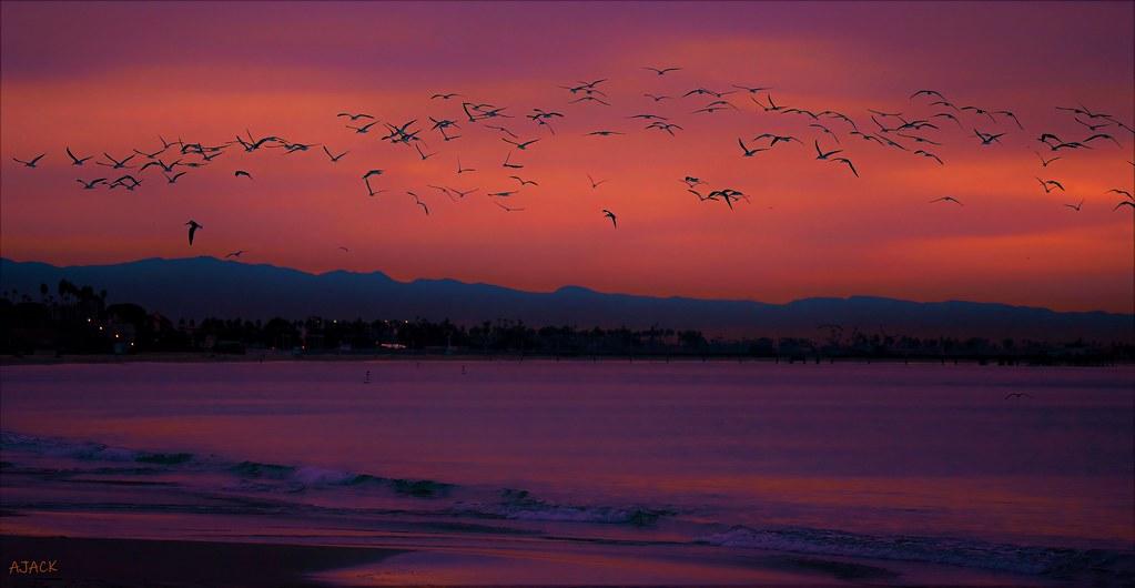 Dawn_Birds_Fires_pe