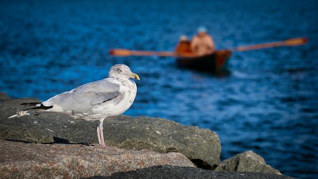 Cape Code SeaGuard
