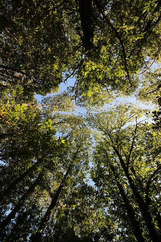 green trees forest matadamargaraça serradoaçor arganil coimbra portugal