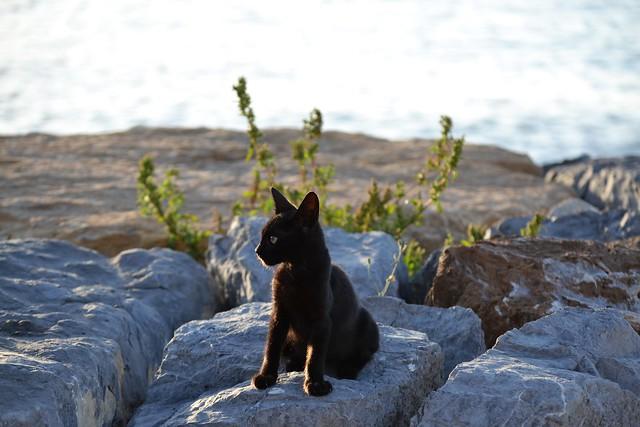 Kitten 💗