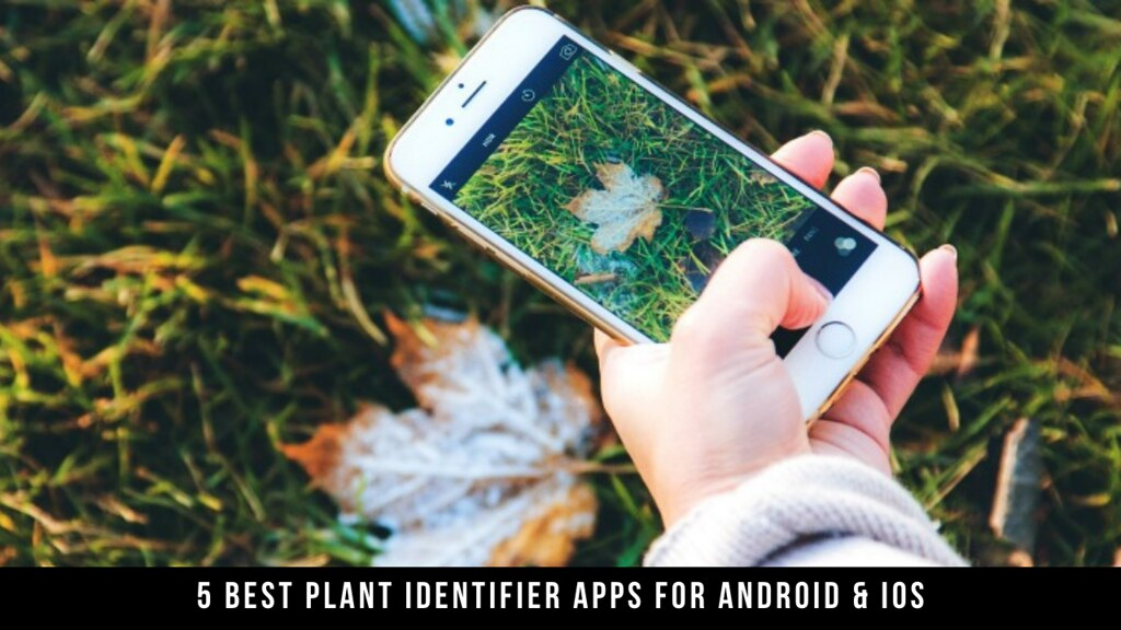 5 Best Plant Identifier Apps For Android & iOS