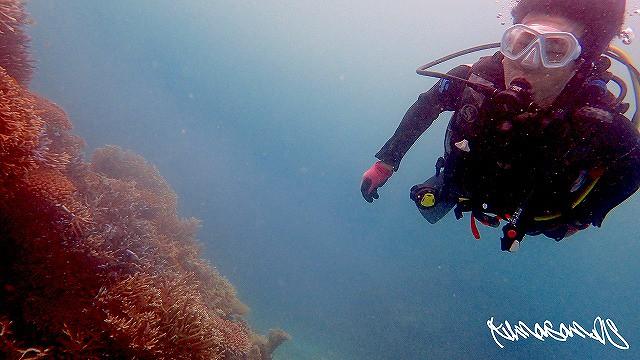 初の石垣島、2度めのファンダイビングのKさん♪サンゴにうっとり~(*˘︶˘*).。.:*♡