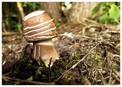 It's mushroom time!