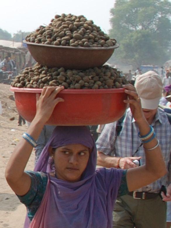 DSC_1937IndiaPushkarCamelFairOpletten