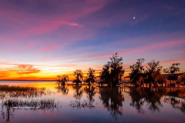 Blue Cypress Horizon Glow